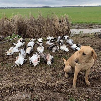 Snowgoose hunt