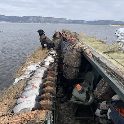 Limits of canvasbacks, drake , drake canvasback, Mississippi River, diver duck