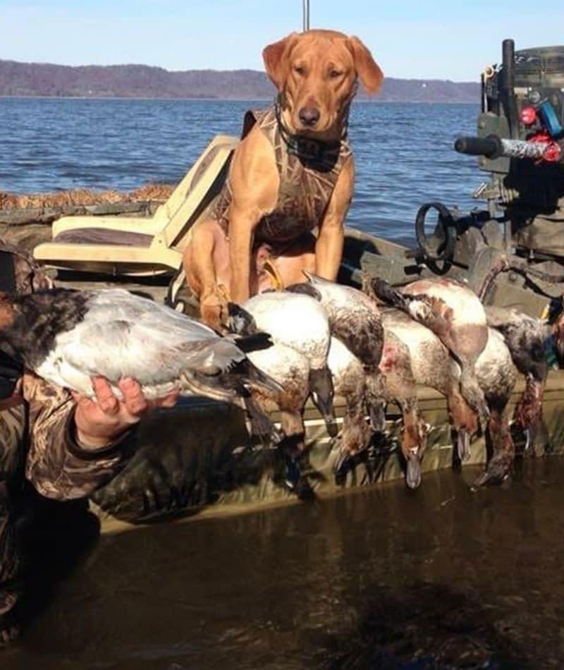 Hunting - Waterfowl Hunting